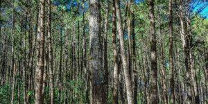 paperexcellence-refloresta